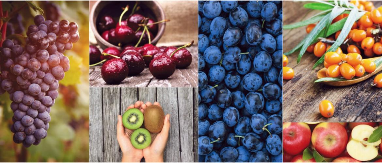 Weitere Früchte wie Trauben, Kirschen, Kiwis, Zwetschgen, Äpfel und Sanddorn Beeren